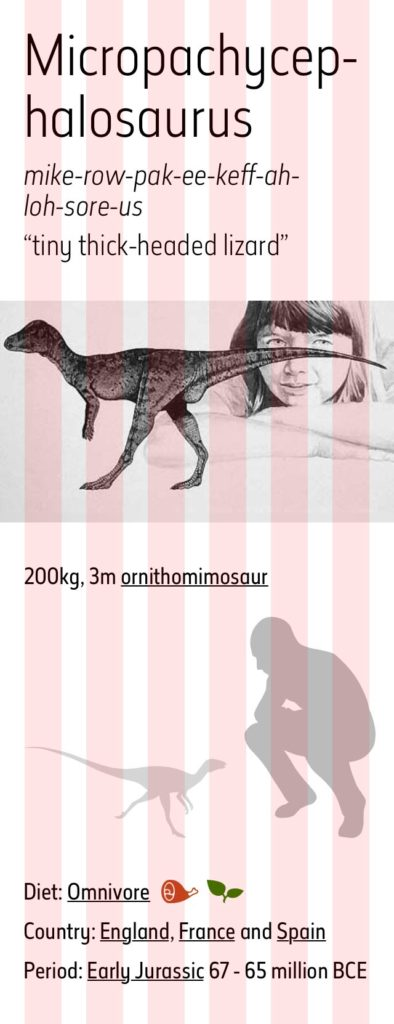 Micropachycephalosaurus mobile grid mockup