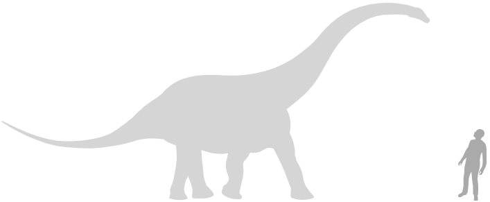 sauropod scale silhouette next to human