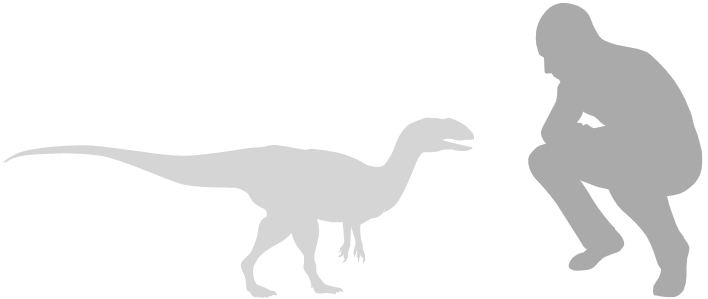 small therapod scale silhouette next to human